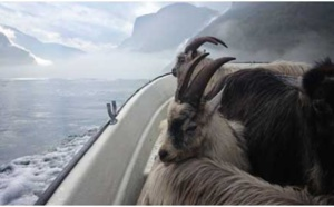 Casgiu d'Altro : Le fromage de chèvre d'Undredal en Norvège, une vraie tradition pastorale